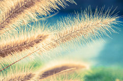 Grass detail with atmosphere Stock Photography