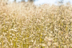 Grass Detail Background Royalty Free Stock Photos