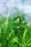 Grass in detail with bokeh Stock Photography
