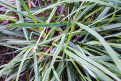 Grass Detail Stock Photos