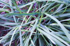 Grass Detail Stock Photography