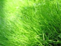 Grass & dew. Macro foto nature Stock Photo