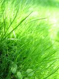 Grass & dew Stock Photos