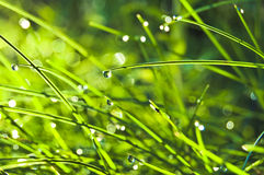 Grass with dew Stock Photo