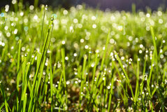 Grass_dew Photos stock