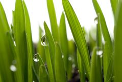 Grass and dew Royalty Free Stock Photos