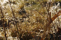 Grass. Dew on grass in autumn Royalty Free Stock Photography