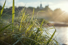 Grass on a dew. With blurred landscape at background Royalty Free Stock Photos