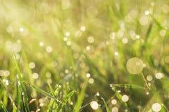 Grass with dew closeup Stock Photos