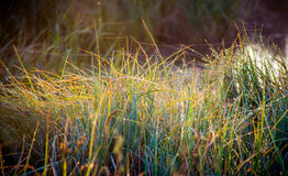Grass with dew and cobweb Royalty Free Stock Photos