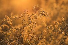 Grass in dew at dawn Royalty Free Stock Photography