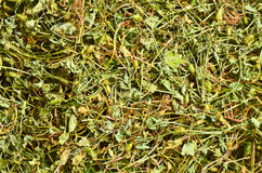 Grass dew dried herbs Royalty Free Stock Photo