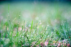 Grass, dew, drop, freshness, natural background is green Royalty Free Stock Photos