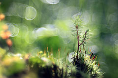Grass, dew, drop, freshness, natural background is green Stock Photography