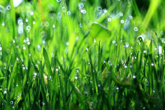 Grass, dew, drop, freshness, natural background is green Stock Images