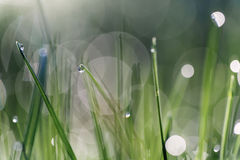 Grass with dew drop Stock Photos