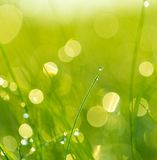 Grass with dew droplets Stock Photography