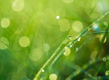 Grass with dew droplets Royalty Free Stock Photos