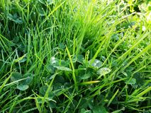 Grass with dew dropping Stock Photos