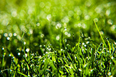 Grass with dew drops Stock Photos