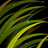 Grass with dew drops on background. Grass with dew drops on a dark background Stock Photo