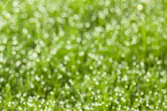 Grass with dew drops Royalty Free Stock Photos