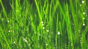 Grass with dew drops, slow motion stock footage