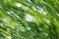 Grass dew macro abstract Royalty Free Stock Photo