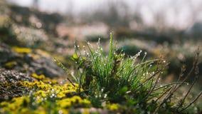 Grass in dew in meadow garden. Grass in dew in the morning meadow garden stock video