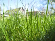 Grass and dew in the morning. It`s a grass,dew on it. Dew sparkles in the sun Stock Photos