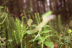 Grass dew rain macro fresh green eco Stock Image