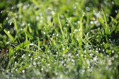 Grass with dew, shallow depth of field Royalty Free Stock Photo