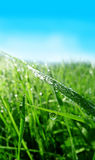 Grass with dew water drops Stock Photos