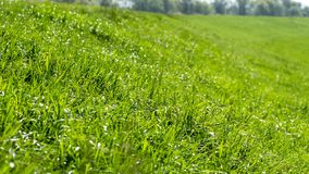 Grass on the dike on the Elbe. In Germany stock photo