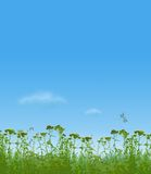 Grass and dragonflies. Dragonflies and bumblebees fly above a grass Royalty Free Stock Photos