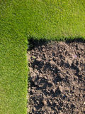 Grass with drak brown soil. Grass with drak brown soil idea for decoration Royalty Free Stock Image