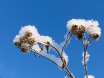 Grass dressed in the snow overcoat Stock Images