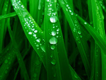 Grass & Drop Royalty Free Stock Photo