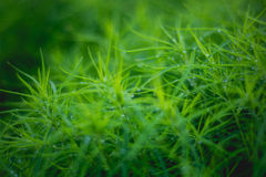 Grass. Drop Stock Image