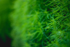 Grass. Drop Stock Photos