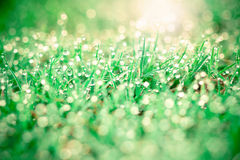 Grass with droplets and beauty bokeh background Royalty Free Stock Photos