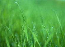 Grass with drops Stock Photo
