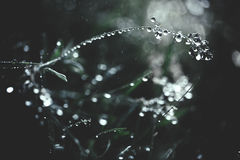 Grass with drops Stock Image