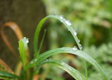 Grass with drops Stock Photos