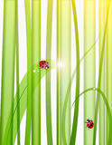 Grass,drops and ladybugs Royalty Free Stock Photos