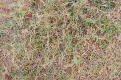 Grass in drought. Royalty Free Stock Images