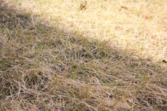 The grass is dry. Autumn wilts nature Royalty Free Stock Photo