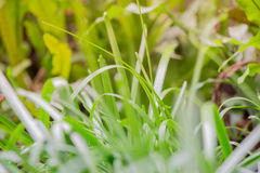 Grass with dry leaves blurred in the background of a small field stock photography