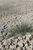 Grass on dry soil Stock Images