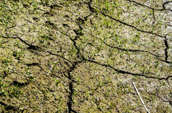 Grass on dry soil with cracks Royalty Free Stock Photo